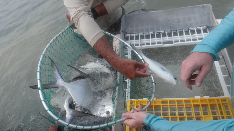 Bucket full of permit