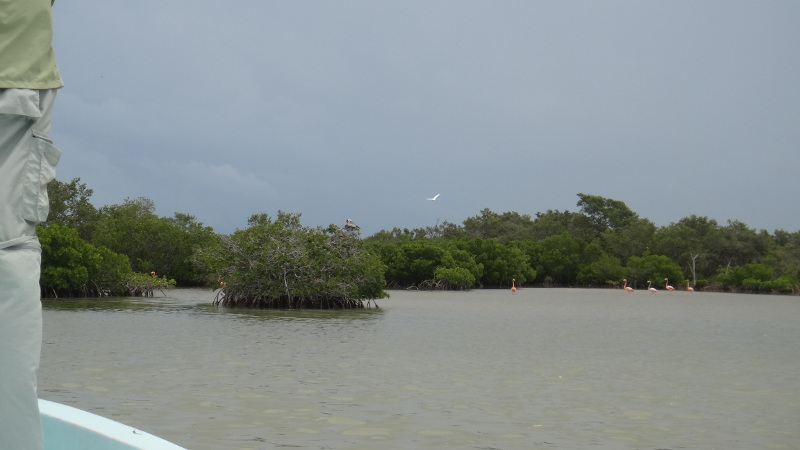 Fly Fishing with Flamingos at Isla Holbox